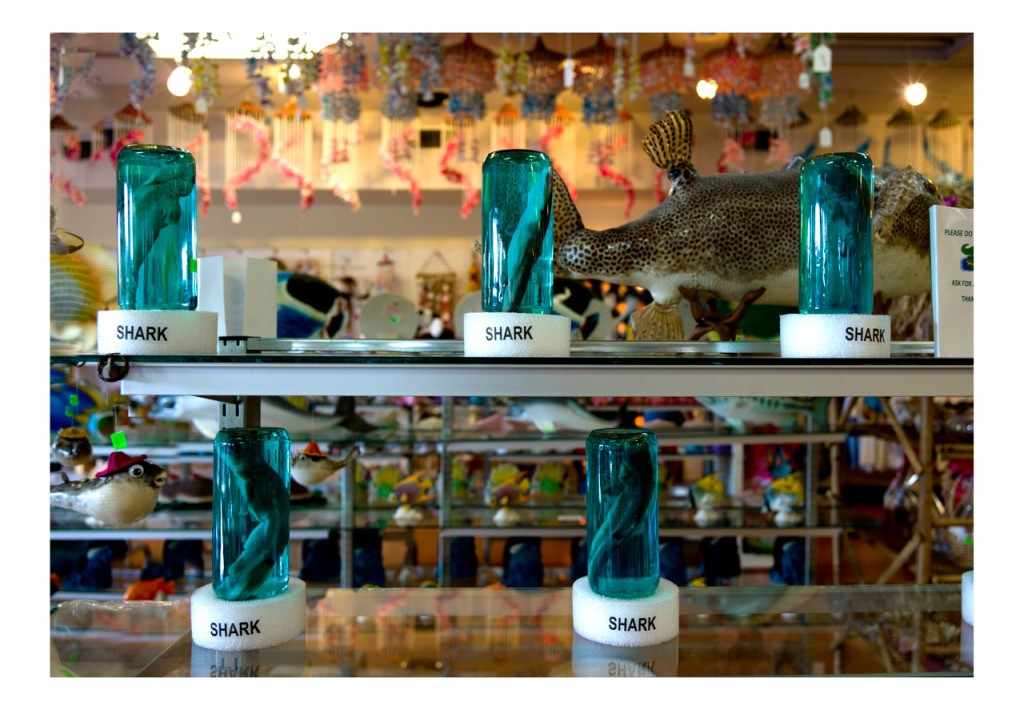 Dana Levy, Sharks, from the Florida Store series, 2012, Photoprint, 90 x 60 cm